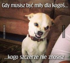 Funny Animal Pictures Of The Day – 24 Pics animals silly animals animal mashups animal printables majestic animals animals and pets funny hilarious animal Funny Animal Jokes, Cute Funny Animals, Funny Animal Pictures, Animal Memes, Funny Dogs, Cute Dogs, Funny Photos, Funny Chihuahua, Teeth Pictures