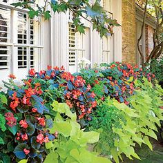 The Window Box | Make life easier by selecting carefree plants such as begonia, lantana, sweet potato vine, and geranium. | SouthernLiving.com