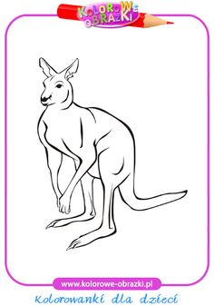 Kangur - Kolorowanki zwierzęta