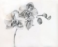 Black And White Orchid Tattoos Designs