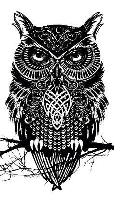 Its another owl