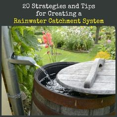 Learn what you need to know about building a rainwater catchment system. Tips and strategies are provided by self-sufficiency expert, Dan Chiras.   20 Strategies and Tips for Creating a Rainwater Catchment System | Backdoor Survival