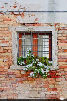 window box with white petunias