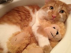 Awwww He brings his teddy bear into the sink with him.    This is overwhelmingly adorable.*