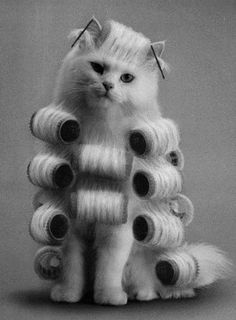 black and white photo of cat in hair curlers