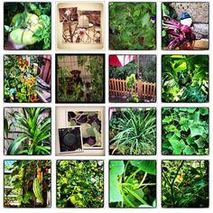 More veggies from my backyard :)