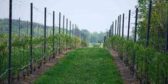 Michigan Wine - Michigan Winery - Verterra Winery. Stop 1