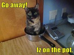 Cats Rule: Cat Behaviors With NO Explanation