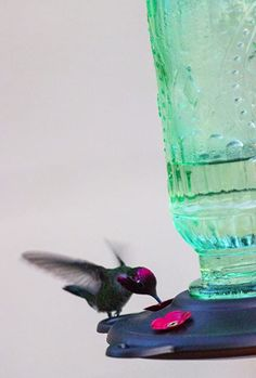 """Love this """"Love Hummingbirds?  We do too :) You'll love this Best Nectar Feeder for Hummingbirds.                      It Attracts Hummers Like Crazy and its the perfect gift idea for moms, grandmas, women, hummingbird lovers or even yourself :)    #hummingbird #hummingbirds #hummingbirdfeeder #hummingbirdgifts #WeLoveHummingbirds Hummingbird Nectar, Glass Hummingbird Feeders, Ruby Throated Hummingbird, Humming Bird Feeders, Cherry Valley, Little Birdie, Like Crazy, Lawn And Garden, Flocking"""
