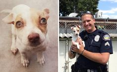 DFA paws for he News:Puppy Addicted To Heroin and Meth Reunites With The Officers Who Saved His Life