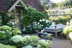 The shady patio area at a little pub in England...pots of hostas, pots of hydrangeas. Not sure what the vine is (doesn't look like hedera helix).
