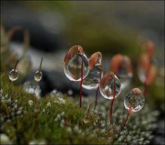 Dewdrops~