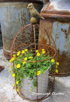 This & That More Cool Container Gardens and What's Blooming Rusty Wire Cloche Over Pot of Gold Dust Mercardonia anizedclutterqueen.Rusty Wire Cloche Over Pot of Gold Dust Mercardonia anizedclutterqueen. Garden Junk, Garden Pots, Potager Garden, Container Plants, Container Gardening, Pot Of Gold, Chicken Wire, Drying Herbs, Yard Art
