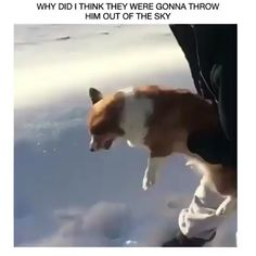 Omg i thought they were gonna throw the dog out of a plane ahahah Funny Animal Memes, Dog Memes, Funny Animal Videos, Funny Animal Pictures, Cute Funny Animals, Cute Baby Animals, Funny Cute, Funny Dogs, Animals And Pets