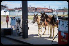 WEB-Donkey-Mule-Gas-Station--peggydavis66-CC