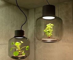 Grow a lively garden even in a windowless environment using these ingenious plant lamps. Each lamp is made from thick, hand-blown glass and is designed to be a completely self-sustaining ecosystem – no irrigation necessary!