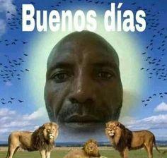 No todo es lo que parece Contenido +18 #detodo # De Todo # amreading # books # wattpad Memes Humor, Fb Memes, Stupid Funny Memes, Haha Funny, Shrek Funny, Reaction Pictures, Funny Pictures, Response Memes, Spanish Memes