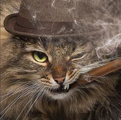 Cat with Cigar