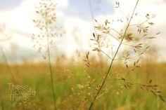 Summer Grass  - 8 x 12 - Photography Print