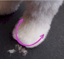 Old English Sheepdog Grooming- Haircut: Sport Clip Dog Grooming Tips, Poodle Grooming, Poodle Haircut Styles, Dog Haircuts, Indoor Pets, Dog Wash, Old English Sheepdog, Shih Tzu Dog, Dog Pictures