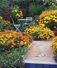 Marigolds | A simple way to choose plants (issues of sun and soil aside) is by color. Even the most basic approach yields gorgeous results, as seen here.