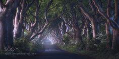 The Dark Hedges by Daniel-Fleischhacker via http://ift.tt/2tlZ3Go