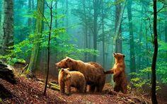 Erdő háttérkép, fotó