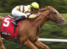 Wise Dan (2007-) 2013 Horse Of The Year