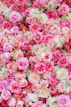 Find Soft Color Roses Background stock images in HD and millions of other royalty-free stock photos, illustrations and vectors in the Shutterstock collection. Thousands of new, high-quality pictures added every day. Rose Flower Wallpaper, Flowery Wallpaper, Flower Backgrounds, Pretty Flowers, Pink Flowers, Pink Roses, Rose Background, Backdrop Background, Colorful Roses