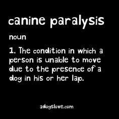 canine (or feline;) paralysis