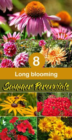 flowers Summer flowers Learn Summer flowers, 8 Long blooming Summer flowers, Summer Perennials, and more about summer flowers. Long blooming Summer flowers not only help the gardener in the summer but also e Perrenial Flowers, Flowers Perennials, Planting Flowers, Flowers Garden, Tall Perennial Flowers, Perennial Gardens, Flower Gardening, Garden Yard Ideas, Lawn And Garden