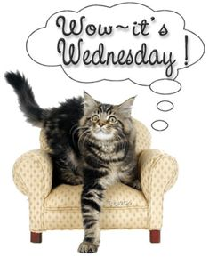 Wednesday | http://www.pictures88.com/wednesday/wow-its-wednesday/
