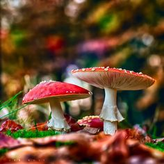 autumn-wood-nymphh:    lovefornature:    http://weheartit.com/entry/43680735    ..Follow for all things Pagan. Witchcraft. Nature. Fantasy and more..