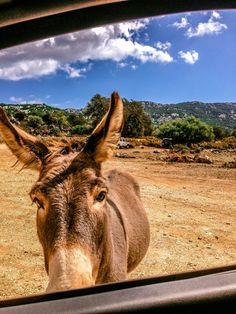 Que faire en 2 semaines en Sardaigne - Golgo