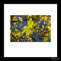 cool Fotografie »Herbstblätter 2«,  #Herbst #Naturansichten