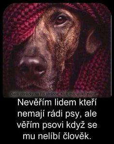 ..věř psovi Dog Quotes Love, Interesting Quotes, Jokes Quotes, English Words, True Words, Monday Motivation, Dog Love, Cool Words, Quotations