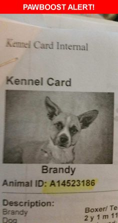 Please spread the word! brandy was last seen in Fairdale, KY 40118.  Description: She has yoda ears...rat terrier has a tattoo on her belly from being fixed at ky humane society her tail is curly and her and pebbles were together  Nearest Address: Near mount holly rd