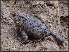 What is a Toad? Learn about amphibians while reading The Salamander Room