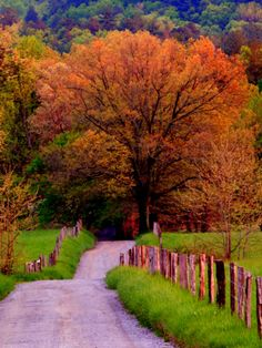 Sparks Lane, Cades Cove, Great Smoky Mountains National Park, Tennessee by Adam Jones On The Road Again, Smoky Mountain National Park, Cades Cove, Great Smoky Mountains, Road Trip Usa, Fauna, Coven, Places To See, Beautiful Places