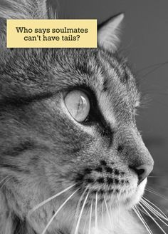 cat loss quotes - Google Search