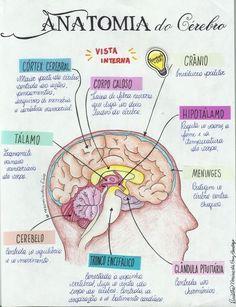 - very nice stuff - share it -trabajos diseñados Medicine Notes, Medicine Student, Mental Map, Study Organization, Medical Anatomy, School Study Tips, Anatomy Study, Brain Anatomy, Lettering Tutorial
