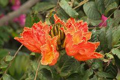 5 nombres de árboles de hoja perenne - http://www.jardineriaon.com/5-nombres-de-arboles-de-hoja-perenne.html #plantas