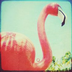 Flamingo photo pink turquoise vintage retro tropical by elgarboart, $6.00
