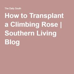 What concerns people most in the country right now? Losing their jobs? Losing their retirements? It's how to properly prune their crepe myrtles. Here's a step-by-step guide. When To Prune Azaleas, Pruning Azaleas, Propogate Roses, Wild Honeysuckle, Climbing Roses, Small Trees, Outdoor Plants, Southern Living, Myrtle