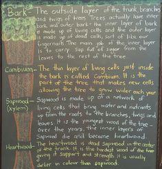 Grade 4- Science continued