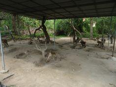 Het buitenverblijf van de apen in het Chiang Mai Monkey Centre