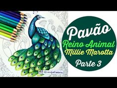 Colorindo o pavão do livro Reino Animal! (Parte 3) - YouTube