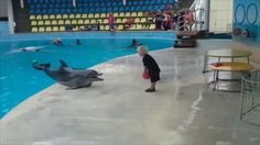 Dolphin plays catch with a toddler (x-post /r/animalsbeingbros