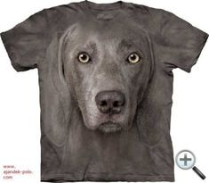 Profess your love for Man's Best Friend! Zany Zak is proud to offer our Weimaraner dog face t-shirt! This T-shirt features an over-sized relaxed fit, with reinforced double-stitching on all seams. Perfect for a nightshirt or great gift for any dog lover! Weimaraner, Weimari Vizsla, Zebras, Ghost Dog, Big Face, 3d T Shirts, German Shorthaired Pointer, Plus Size T Shirts, Tye Dye