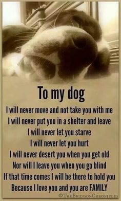 To my dog. To my little baby.